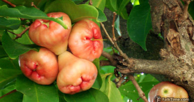 Malay rose apple