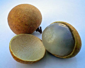 Open longan fruit