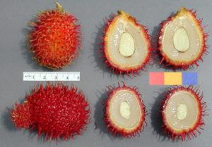 Rambutan, inside