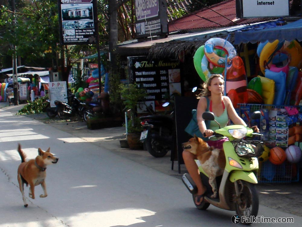 Dogs, girl & Thai massage parlor