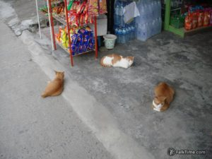 Three red cats, private shop