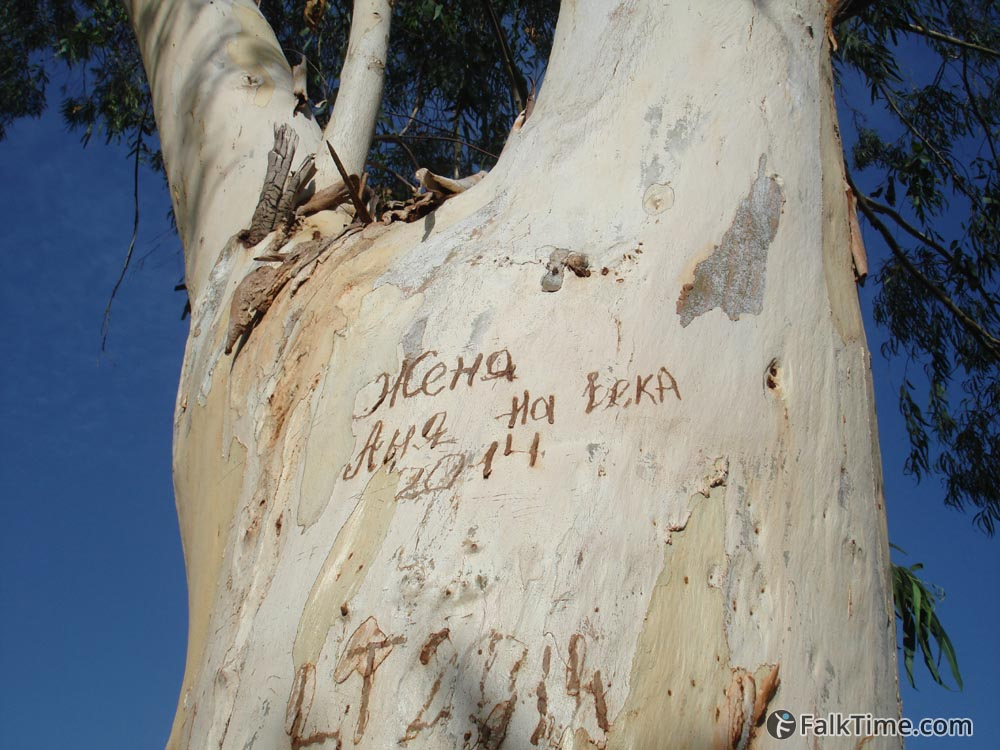 Inscription carved on a tree