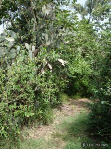 Nature trail in Cha Am