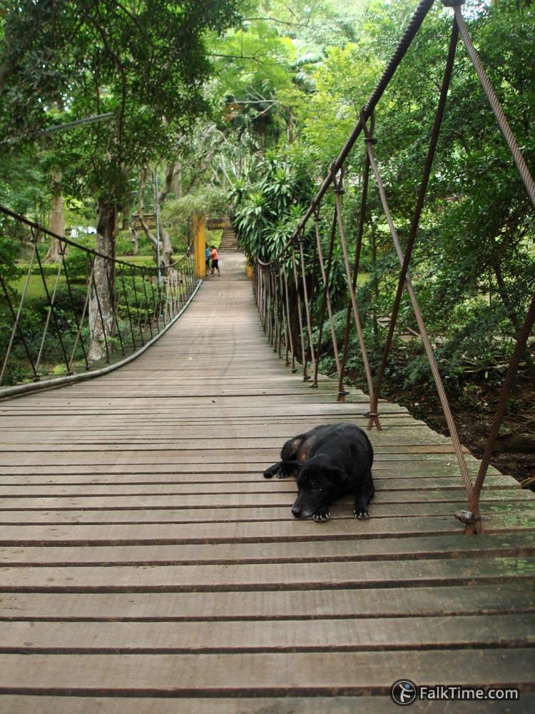 A dog resting on suspension bridge