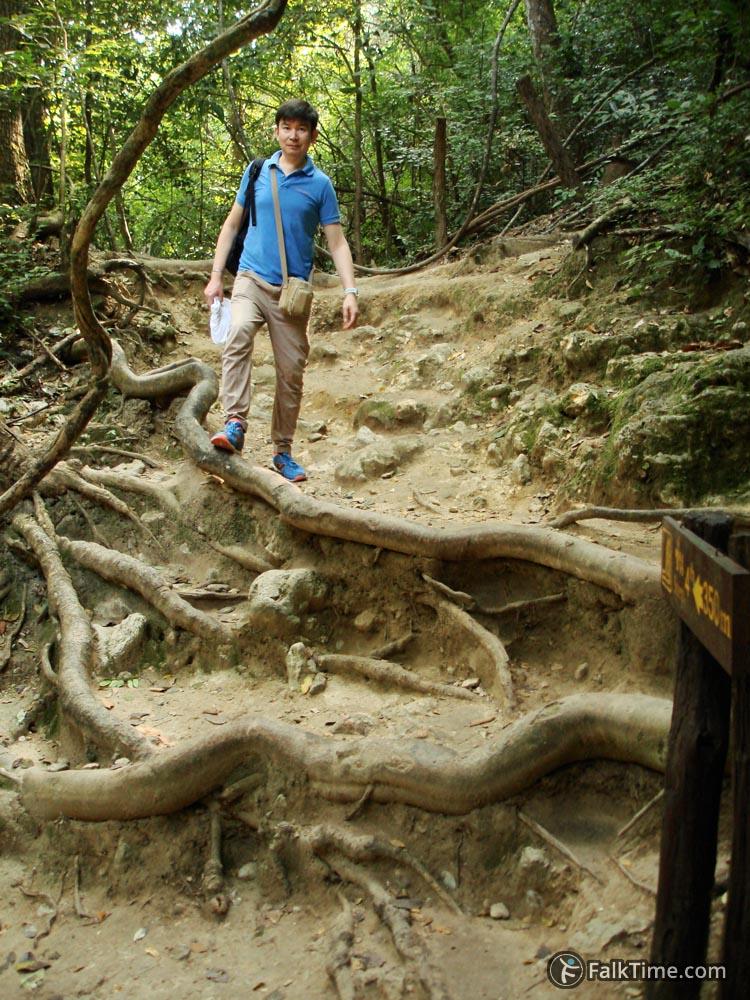Natural steps