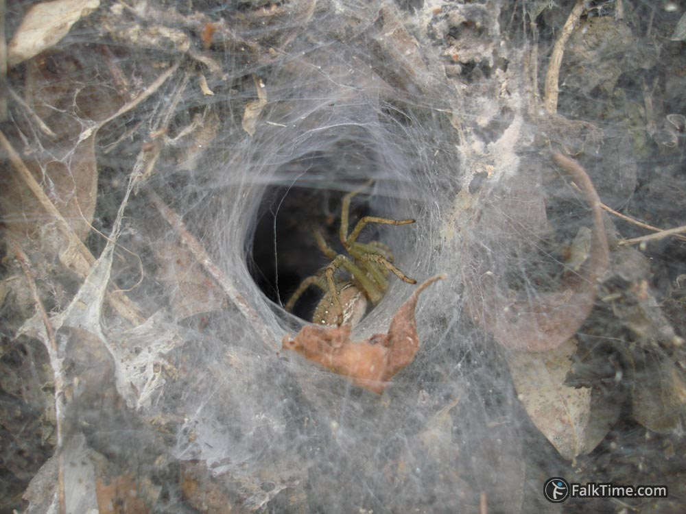 Spider and his funnel web